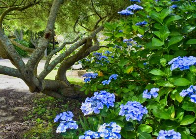 Le Jardin - Autant en emporte le vent