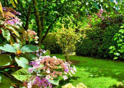 Le Jardin - Hydrangea macrophylla 'Gong Shan'